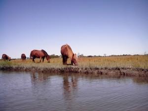 pic5_ponies_water
