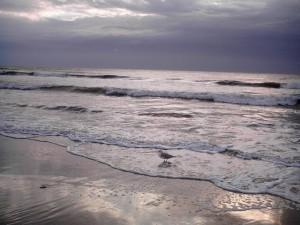 pic_1_ocean