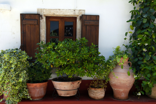 Window with wood shutters and many flower pots in old home (Crete, Greece)